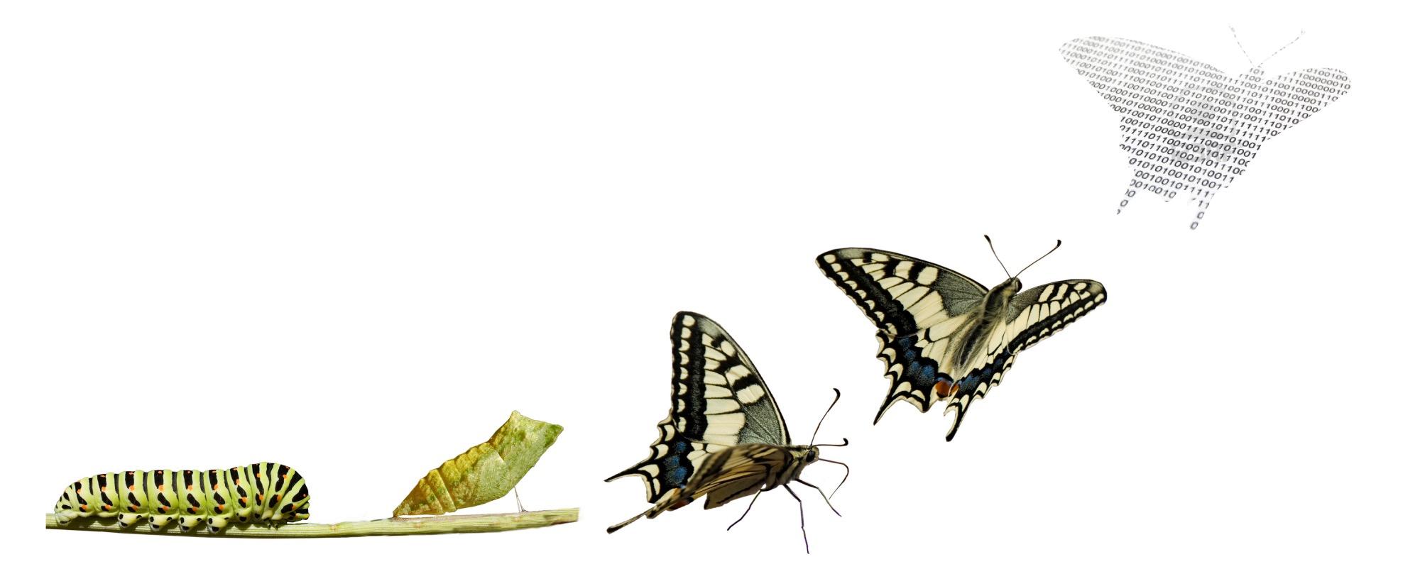 transformacion-por-que-es-tan-dificil